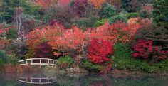 Image result for sequoia garden retreat Garden, Image, Garten, Gardens, Tuin, Yard