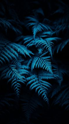 Stunning Wallpapers, Plant Leaves, Samsung