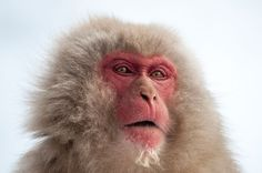 Japanese Macaque Image, Japan | National Geographic Your Shot Photo of the Day