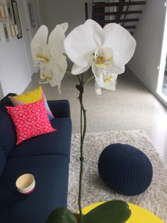 Beautiful orchids given to us for a housewarming present.