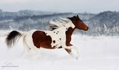 Cool Texas Cowboy by sowi01.deviantart.com on @deviantART