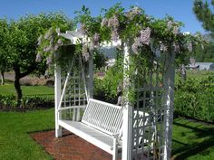 Wisteria looking lovely on an adorable swing - want this for my backyard!