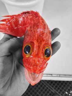 Deep Sea Fish Caught by Russian Fisherman Are Fascinatingly Terrifying