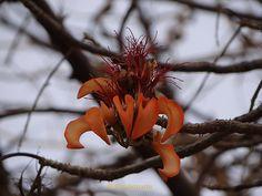 La belleza carece de formas y colores, pero las tiene en abundancia, en mi jardin tropical, cualquier tronco seco es fertil para la mas hermosa de las flores.