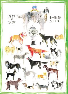 Crufts dog show, someday...