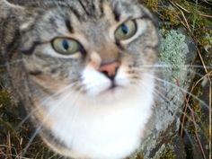 Villi kissa