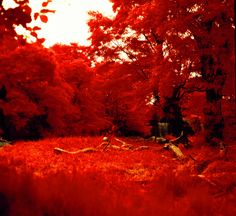 ARTFINDER: Empty Lion Enclosure by Mark Hannah - Shot with expired Aerochrome color infrared film and a vintage Hasselblad 500 C/M medium format film camera.