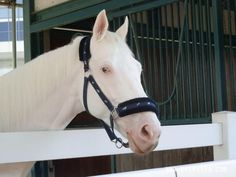 White Vessel - White thoroughbred racehorse with half blue eye Types Of Horses, Thoroughbred Horse, Racehorse, Photo Competition, Horse Photos, White Horses, Horse Racing, Beautiful Horses, Ghosts