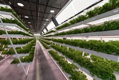 Horizontal Farm and Sustainable Housing for Students