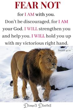 Thus saith the Lion of Judah, thy Lord - Fear Not ,for I am with you! Without speaking life with this powerful promise, fear can hold us hostage. Do you have a testament of how God delivered you ? Here is mine! Scripture Verses, Bible Verses Quotes, Bible Scriptures, Scripture Pictures, Bible Prayers, Prayer Quotes, Faith Quotes, Lion Of Judah Jesus, Lion Quotes