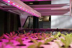 LED lightning - MultiLayer Cultivation #Codema
