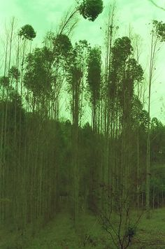 - acampamento cachoeira mandaguari