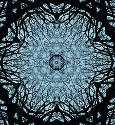 One tree can create a lot of shapes. #multiple #lines #tree #point #middle. Devesh Dev. D...