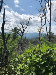 The Hike In Tennessee That Will Lead You Straight To Sugarlands Graveyard Smoky Mountains Hiking, Mountain Hiking, Spooky Places, Places To See, Tennessee, River, Nature, Outdoor, Outdoors