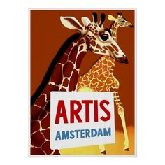Advertentie van de Dierentuin ~ Amsterdam Holland  Poster