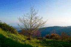 Morning, Milies, Pelion, Greece. JR