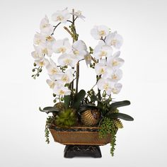 Symbolizing purity and beauty in the language of flowers, cream phalaenopsis orchids are the spectacular focal point of this artificial floral arrangement. Designed to bring timeless elegance to a console table, counter or niche, the floral display features a luxurious metallic antiqued finish resin urn as its base.
