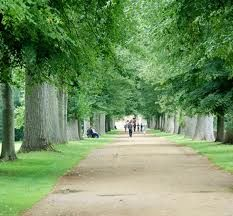 My favourite trees. Christ Church Meadows.