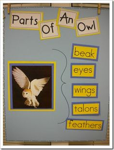 lets learn about owls in the fall. thinking map - brace map in KG parts of an owl Owl Activities, Autumn Activities, Infant Activities, Owl Preschool, Kindergarten Science, Owl Theme Classroom, Classroom Ideas, Classroom Teacher, Autism Classroom