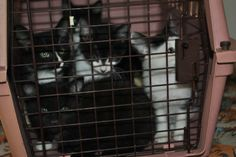 """As more cats come in, the techs stack the crates as many as five high. The rows and columns of carriers start to resemble walls a child might build with blocks. Except each box has whiskers and wide eyes--one face or even four or five--peeking out its front door. --from """"KItten Season"""""""