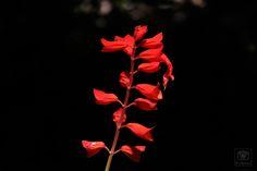 Flor, efeito noite. Por: Patrícia Abreu