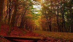 Romania, Country Roads, Park, Color, Parks, Colour, Colors