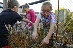 The Westerville third-graders flocked to the milkweed garden to learn about life cycles and watch monarch butterflies feast on nectar. But the educational fun soon caused a frenzy after their teacher was tipped off that the flowering plants near the playground were illegal.