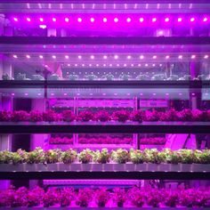 Future Food District @Expo2015Milano  #verticalplanting