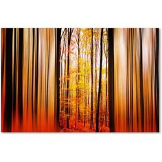 Trademark Fine Art Excited Oxygen Canvas Art by Philippe Sainte-Laudy, Size: 12 x 19, Multicolor