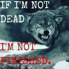 Save Gray Wolf, buy quality products and provide wolf sanctuary!🐺Check out get awesome designs & products to express your LOVE to - Wolf Qoutes, Lone Wolf Quotes, True Quotes, Great Quotes, Motivational Quotes, Inspirational Quotes, Photo Facebook, Wolf Love, Wolves In Love