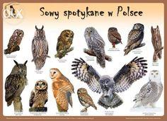 Plakaty edukacyjne Ptaki w Polsce Szczecin - image 4 Sensory Activities Toddlers, Preschool, Birds, Animals, Montessori, Google, Geography, Poster, Animales