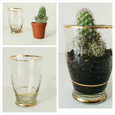 DIY Terrarium with vintage old glass  http://serenachini.wordpress.com/