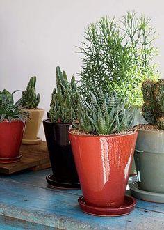 Descubra as espécies de plantas certas para você