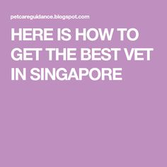 We all love our pets and we consider them as part of our families. If you actually look at different videos online, you would see that a lo. How To Get Better, Animal Welfare, Singapore, Families, Good Things, Pets, My Family, Households, Animals And Pets