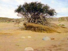 Graves problemas de Desertificacion en la Argentina