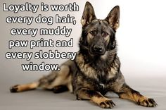 Found on FB - K9 Instinct.