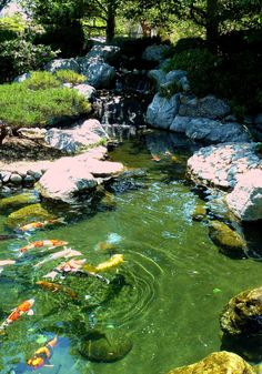 japanese koi ponds   ... say? I like trees. (This is also at the Japanese Friendship Garden