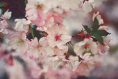 by Ivett Molnár Beautiful Flowers, Tumblr, Plants, Bees, Butterflies, Tokyo, Photos, Pictures, Tokyo Japan