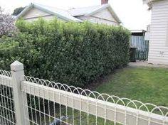 Love the curly wire fence Veg Garden, Garden Art, Fence Ideas, Yard Ideas, Idea Books, Silk Tree, Cottage Renovation, Front Fence, Wire Fence