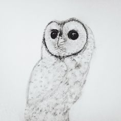 Drawing of spotted owl Pencil on paper 18 x 24 inches © 2016 by Simone Guimaraes