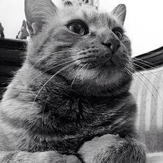 #cat #maddú