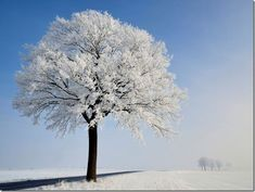 freezing fog, Hannut, Belgium by pierre hanquin Beautiful World, Beautiful Places, Simply Beautiful, Beautiful Pictures, Fog Photography, White Oak Tree, Technique Photo, Lone Tree, Blog Pictures