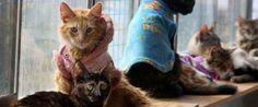 PHOTOS: Nurse Gives 175 Terminally Ill Cats A Loving Home