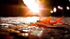 Autumn Photo  #Hello #My #Today #BestPhoto #Nice #Cute #Beautiful