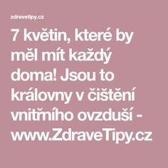 7 květin, které by měl mít každý doma! Jsou to královny v čištění vnitřního ovzduší - www.ZdraveTipy.cz