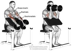 "Dumbbell hammer preacher curl. An isolation exercise. Targets your brachioradialis, not your biceps brachii. Your biceps brachii and brachialis act as synergists. To learn why your brachioradialis is the target, visit site and read the ""Comments and tips""."