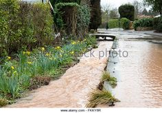 March becks in the villages of Oxton ,and Gonalston have burst their - Stock Image Bears, Sidewalk, March, Country Roads, Stock Photos, Amazing, Image, Side Walkway, Walkway