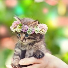 #Animals Precious Taby Kitty with Flower Halo.