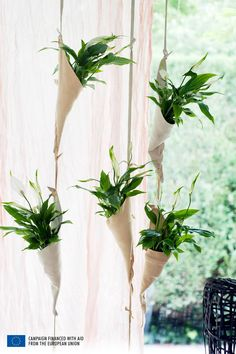 "Imagine decorating the house with a plant that carries the word ""peace"" in the name? For you can do this by using the lily of peace. This very popular plant in interior decoration Read More . Peace Lily, Ficus, Air Plants, Indoor Plants, Lily Care, Staghorn Fern, Macrame Plant Hangers, Succulent Terrarium, My Secret Garden"