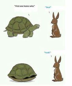 Hare vs tortoise